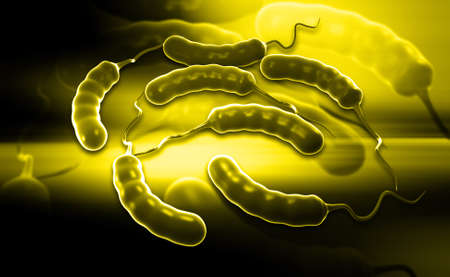 Digital illustration of Coli bacteria in colour background