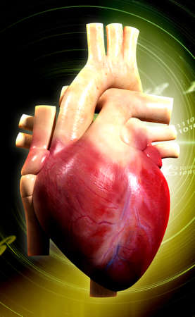 digital illustration of a human heart in colour background