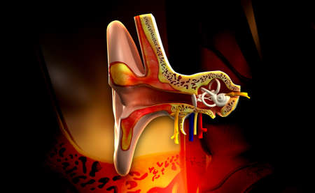 digital illustratio of Ear anatomy in colour background photo