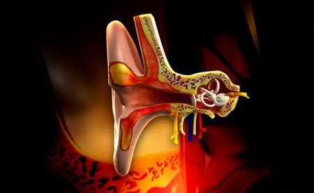 tympanic: Illustratio digital de la anatom�a del o�do en el fondo de color
