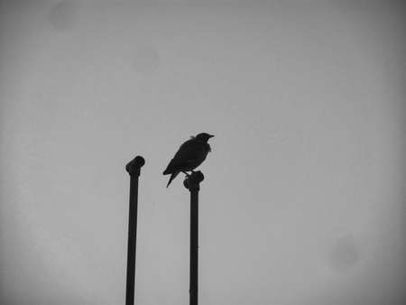 Silhouette image of a bird sitting on a pole