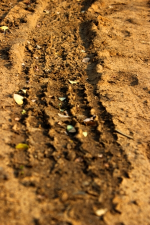 Tyre Tracks on Mud