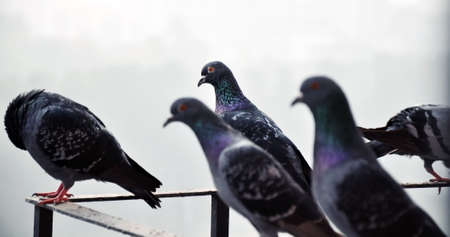 Pigeons sitting on a railing photo