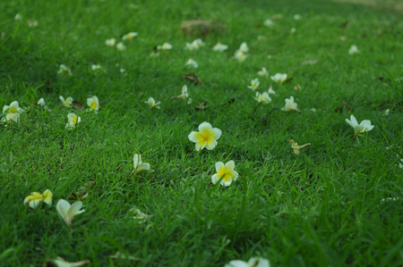 Flowers on Grass Background