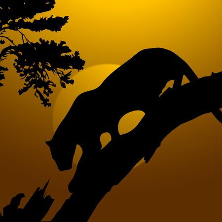 lioness: silhouette view of tiger on a tree, wildlife  Stock Photo