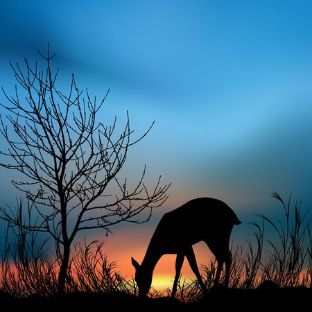 silhouette view of a deer eating grass  photo