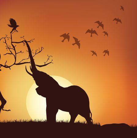 silhouettes elephants: ver la silueta de elefante tirando de las ramas, la salida del sol, puesta de sol