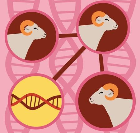 chromosomal: Closeup of sheep with dna