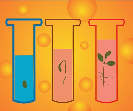 Closeup of test tubes with growing plants Stock Photo - 9688715