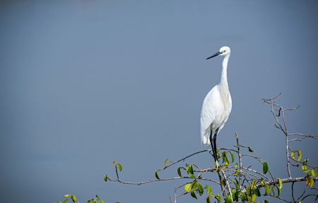 A white heron standing on top of a tree branch