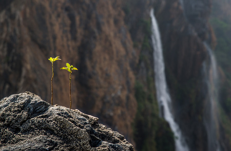 two small plants on top of a mountain with a distant view of waterfalls  Stock Photo