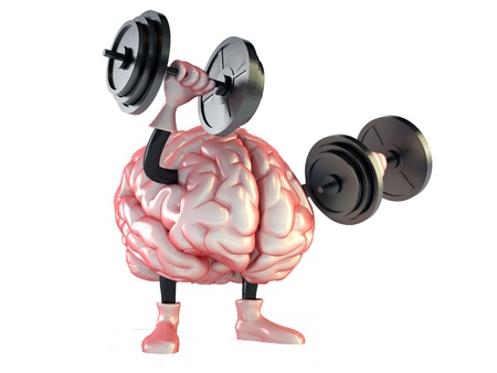 skull biology: brain