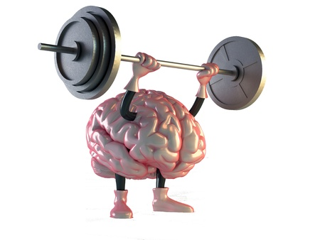 anatomy brain: brain
