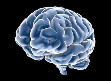 cerebral cortex: human brain