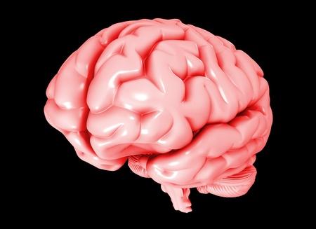 understanding: human brain