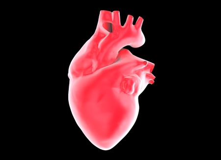 anatomy skeletal: human heart