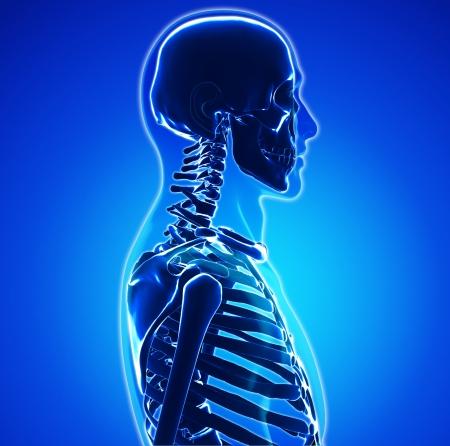 glas 3d: Male anatomy