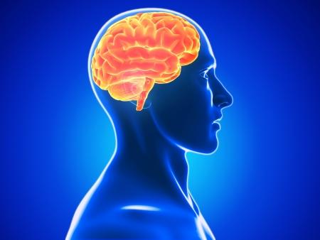 radiacion: cerebro humano Foto de archivo