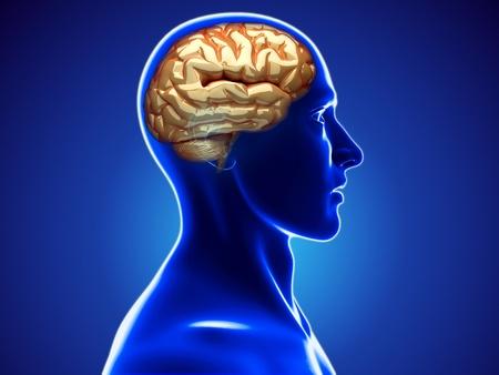 brain cancer: human brain