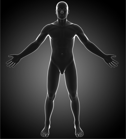 glas 3d: Male anatomy