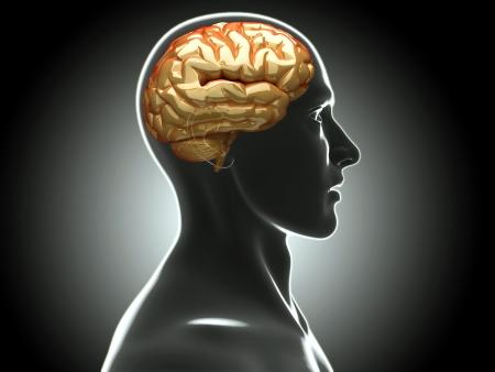 x rays negative: human brain