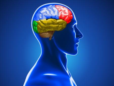 인간의 두뇌