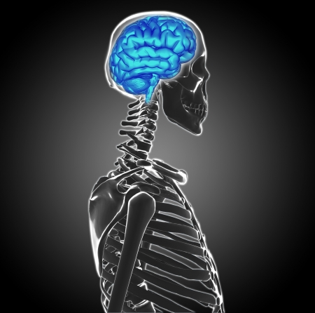 human brain Stock Photo - 20945619