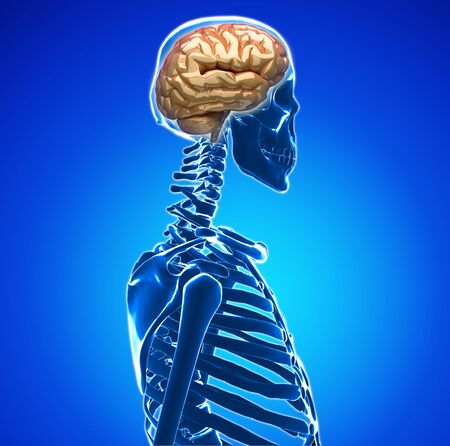 human brain Stock Photo - 20945620