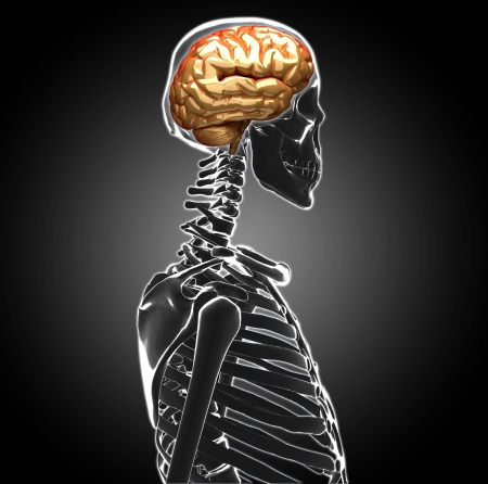 human brain Stock Photo - 20945622