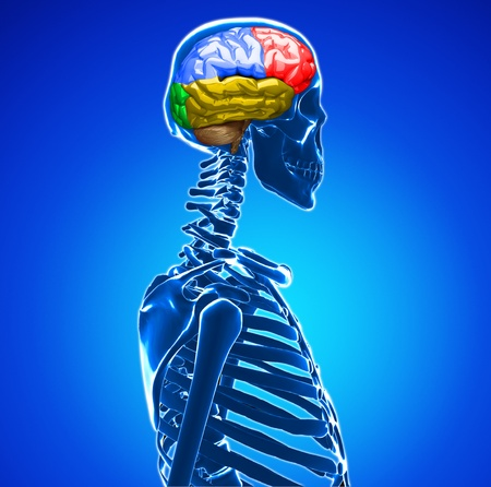 human brain Stock Photo - 20945637
