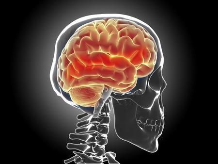 human brain Stock Photo - 20945639