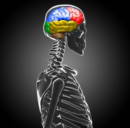 human brain Stock Photo - 20945641