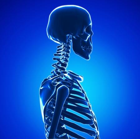 x rays negative: Human Skeleton