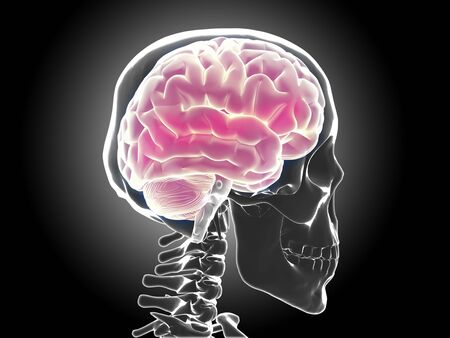 human brain Stock Photo - 20945645