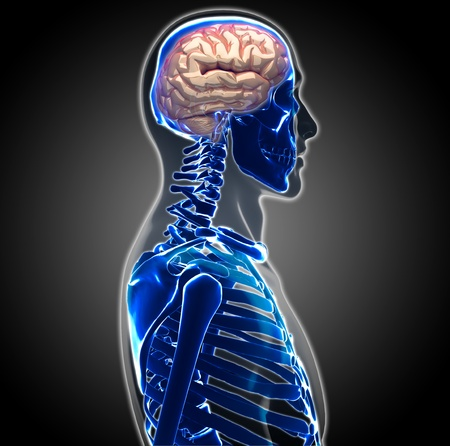 human brain Stock Photo - 20945647