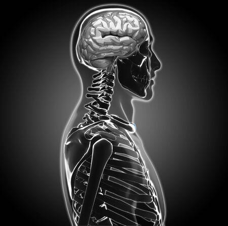 human brain Stock Photo - 20945649