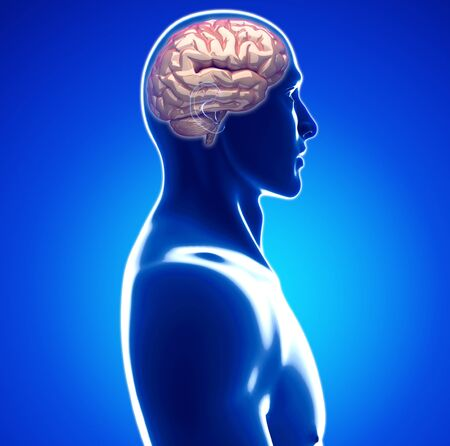 abdomen: human brain