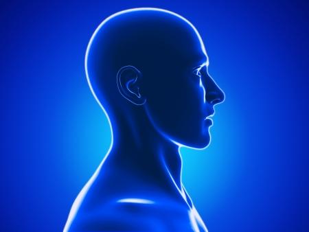 transparen: cabeza humana
