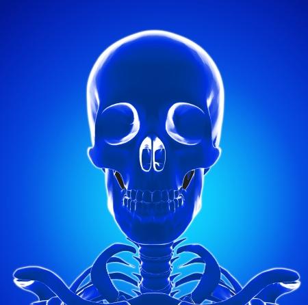 x rays negative: Human Skeleton head Stock Photo