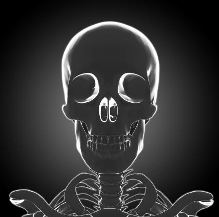 Human Skeleton head photo