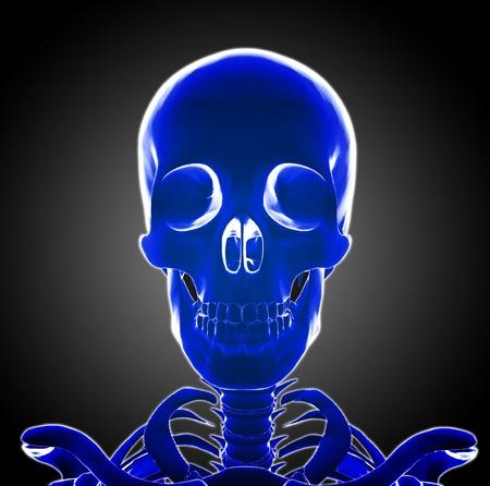 Human Skeleton head Stock Photo - 20945807