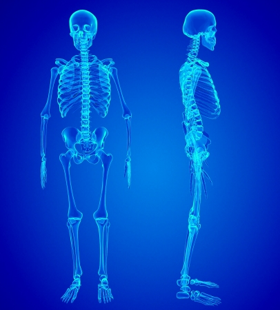 3 d illustrations: Male Human skeleton, two views