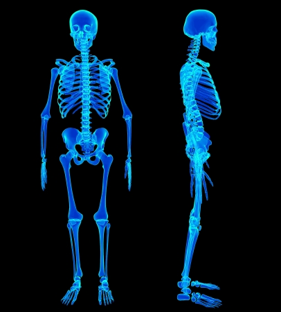 x ray image: Male Human skeleton, two views