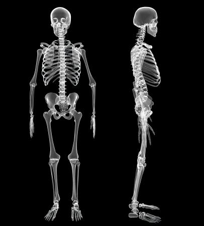 Männlich Menschliches Skelett, zwei Ansichten Standard-Bild - 20945810