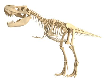t rex: Tyrannosaurus T Rex skelet