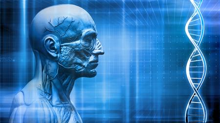 human body anatomy background with dna