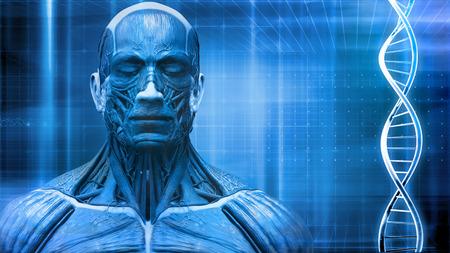 anatomie humaine: humain fond d'anatomie du corps avec dna