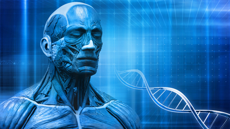 anatomically: human body anatomy background with dna