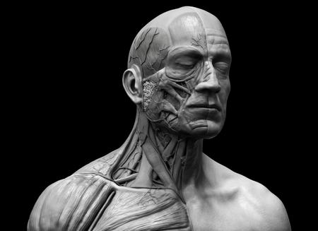 silueta humana: anatomía cuerpo humano - Anatomía del músculo del cuello cara y el pecho en Realistas 3D Foto de archivo