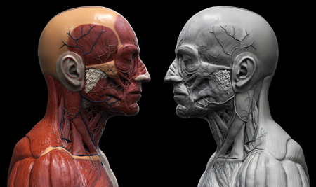 Human Body Anatomy Muscle Anatomy Of The Face Neck And Chest
